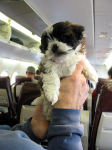Puppy On Plane | Book FHR Travel Blog