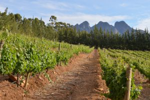 Cape Town Vineyard | Book FHR Travel Blog