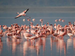 Flamingos In Water | Book FHR Travel Blog